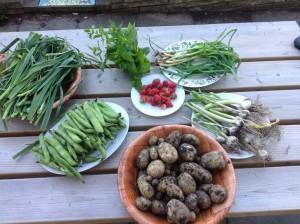 Een mooie oogst